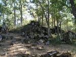 Roble melojo (Quercus pyrenaica)